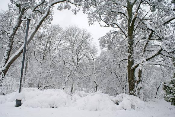 Красивый зимний сад фото
