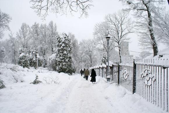 Сад зимой картинки
