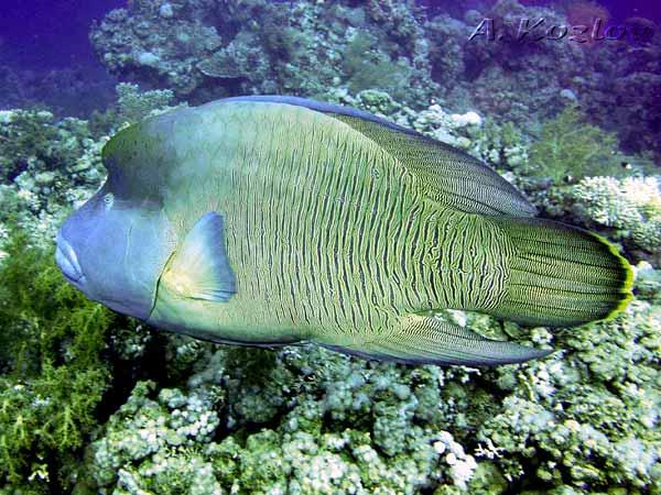 Ежами изобилуют углубления в кораллах
