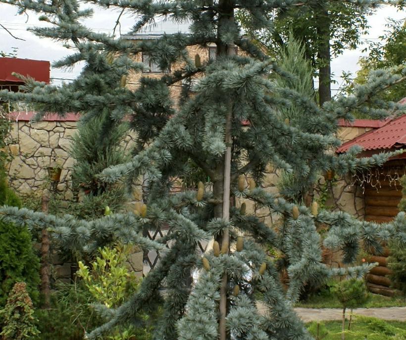 Львов. Фото. Гостиница Святослав