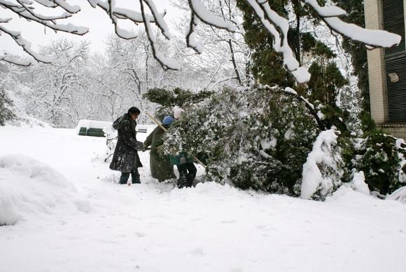 Киев зимой. Фото. Ботанический сад зимой. Фото.