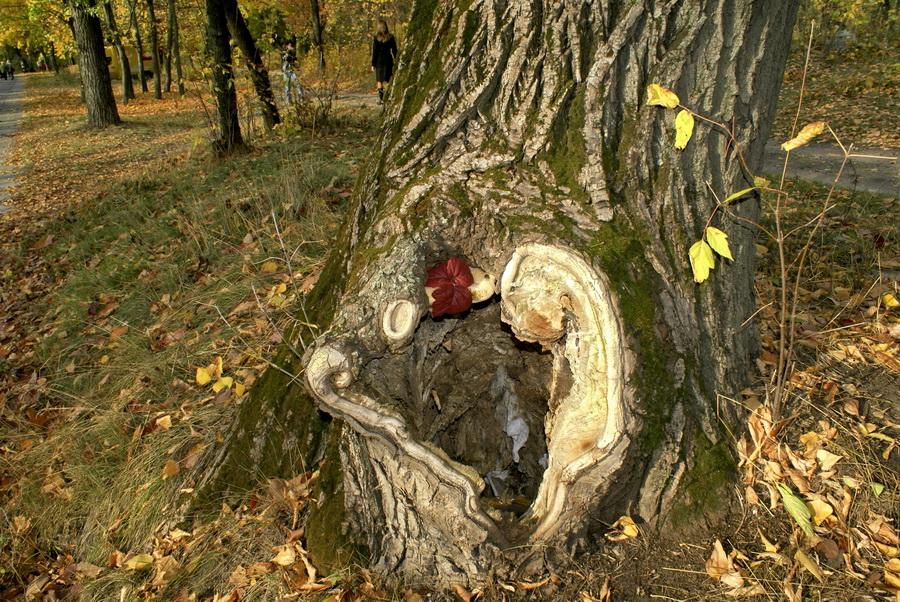 Гидропарк Киев осень фотографии