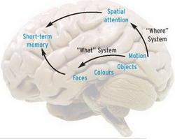 Как улучшить и развить память