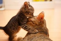 Заботьтесь о родителях