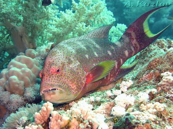 Отдых в Египте. Шарм Эль Шейх, Melia Sinai. Подводный мир